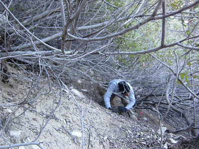 Crawling through the brush laying out the Catalina Verdugo Trail.