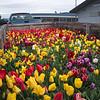 Spring Garden Fair Set-Up Day, Grants Pass