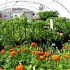 Greenhouse - Josephine County
