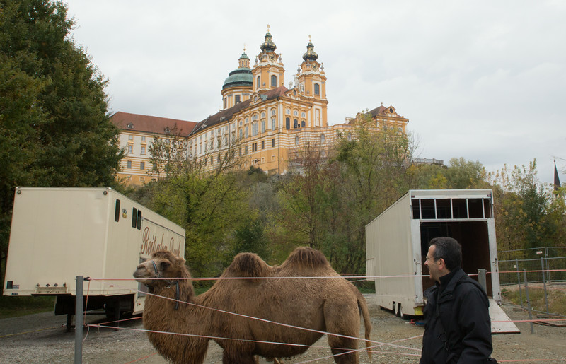 Circus camel in Melk