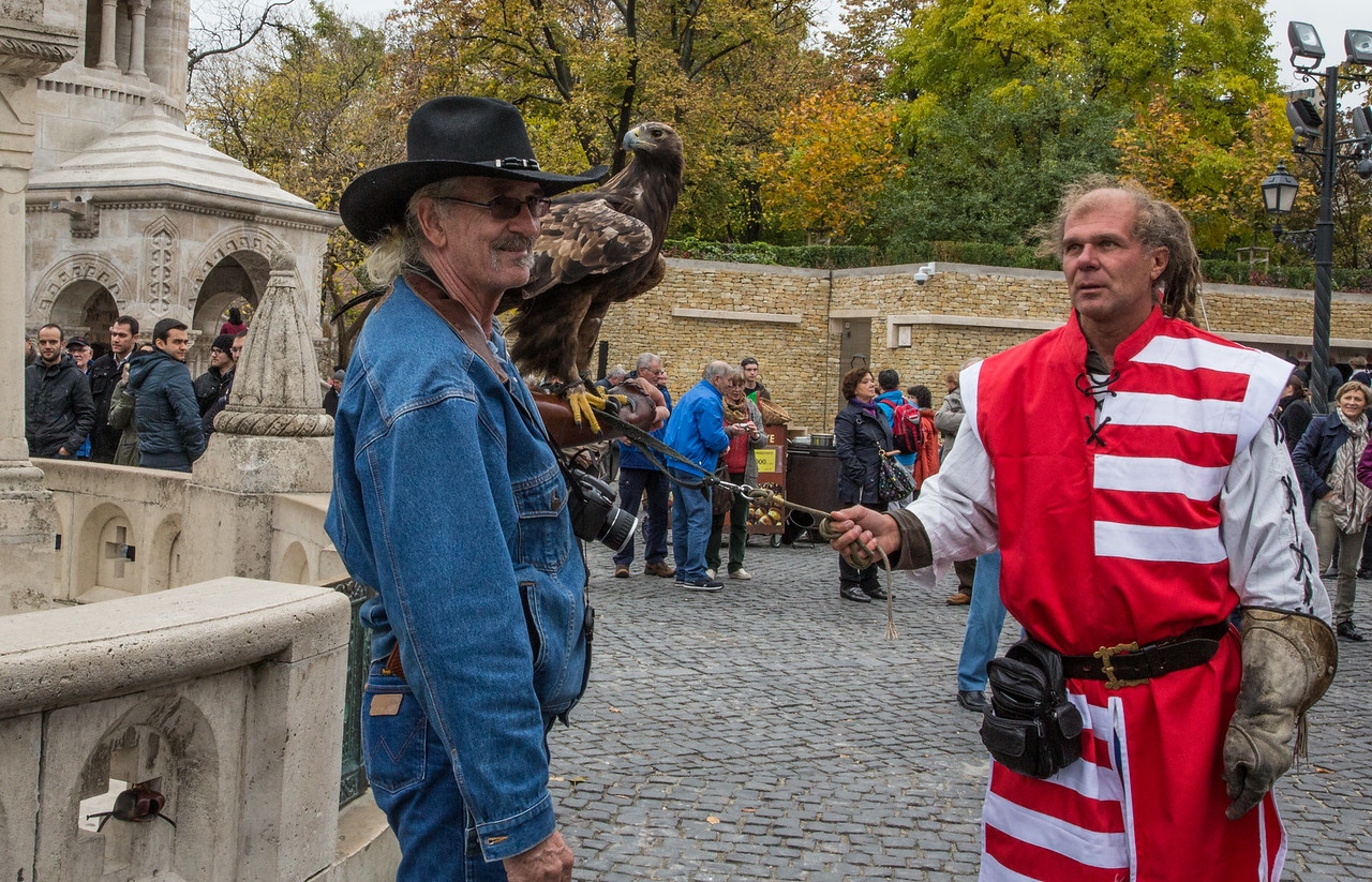 Hawk for the tourists