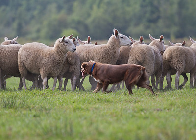2013 Sheep Camp