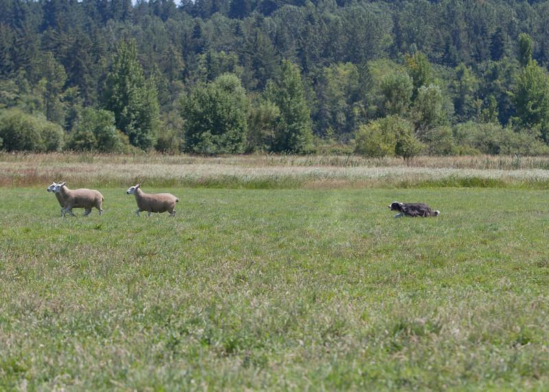 July 24, 2013 - at Sheep Camp