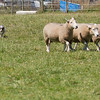 July 26, 2013 - at Sheep Camp