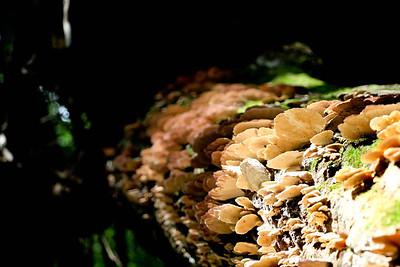 Mushrooms in light; White Falls