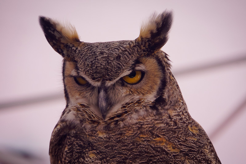 This owl was at Mike's camera this weekend and kept a close eye on me as I shopped.