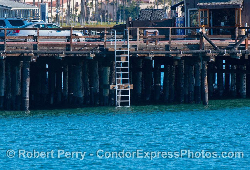 king tide high tide Stearns Wharf ladder 2013 01-12 SB Harbor-006