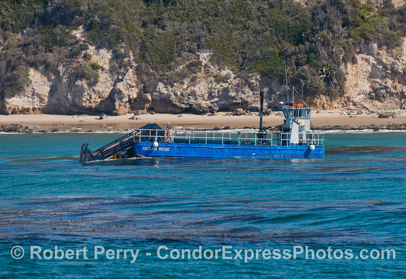 "The kelp harvesting vessel ""Ocean Rose"" at work along the giant kelp beds (<em>Macrocystis pyrifera</em>) off the Santa Barbara coast.  The ""Ocean Rose"" and its sister ship ""Ocean Harvest"" gather kelp to feed abalones (<em>Haliotis</em> sp.) being farmed at Cayucos, California.  This is the only reason kelp is harvested these days."