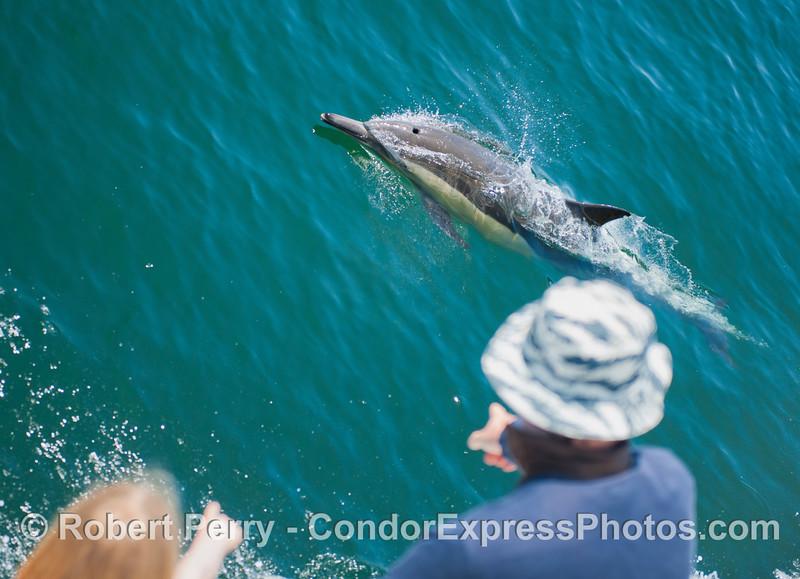 Condor people enjoy a friendly visit from a common dolphin (<em>Delphinus capensis</em>).