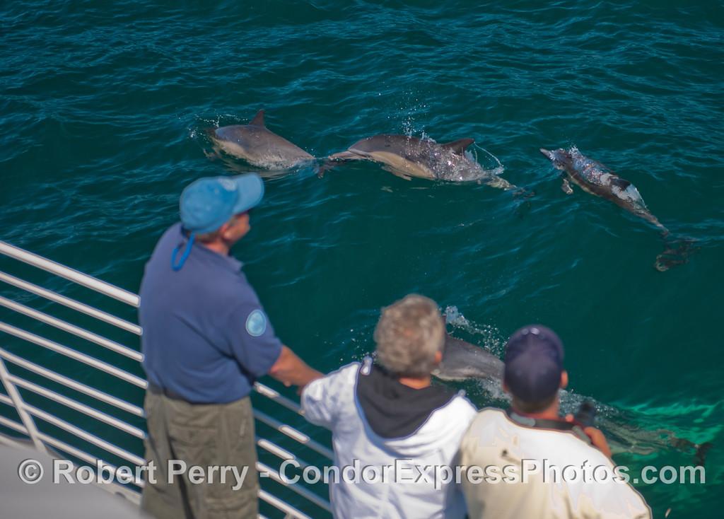 Delphinus capensis & pasengers 2013 06-19 SB Channel-177