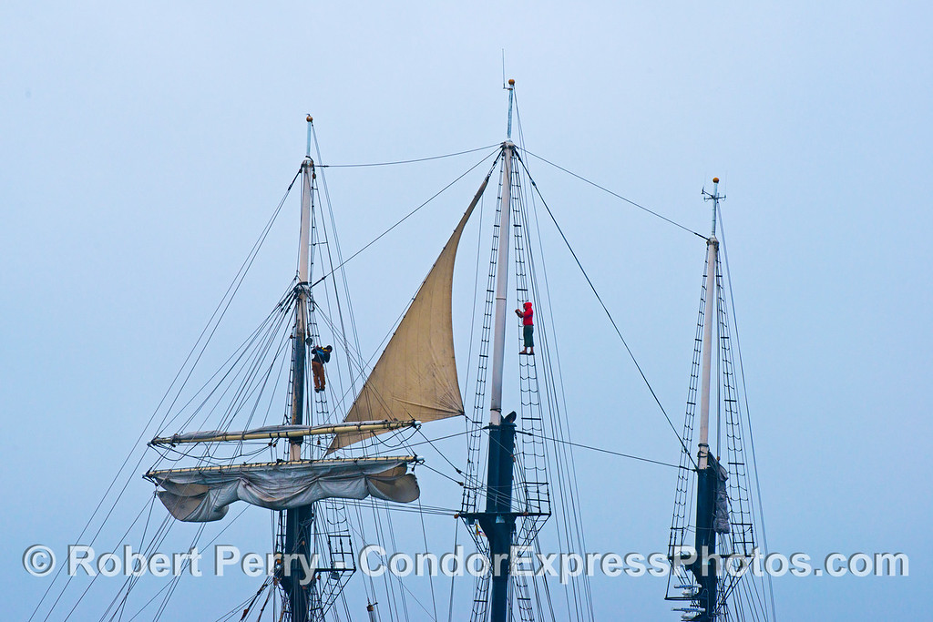 Crew members climb high up the rigging of the sailing ship Tole Mour in search of blue whales.