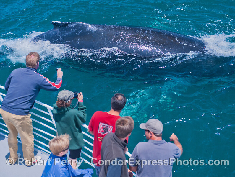 One of three photos of a giant humpback whale (<em>Megaptera novaeangliae</em>) with bright white pectoral wings that came by the Condor Express so close you could count the barnacles on its chin.
