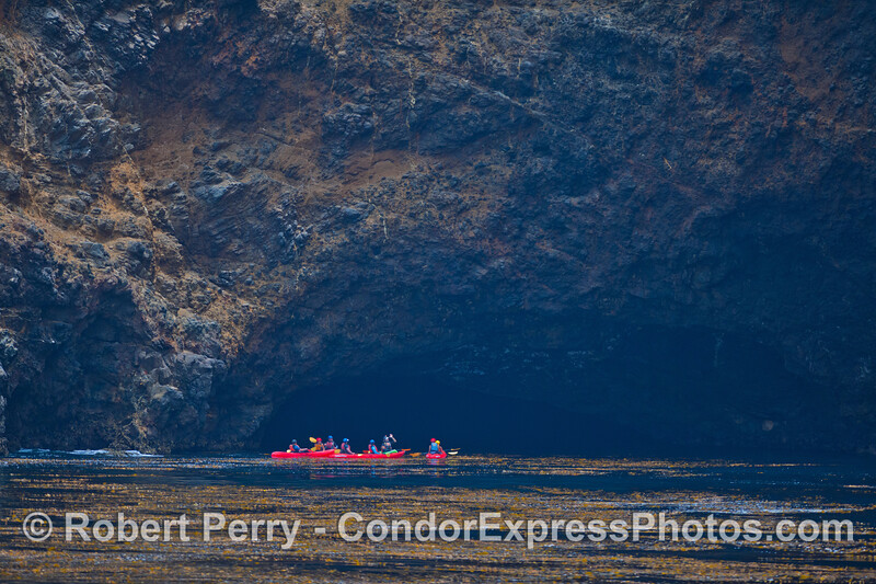 A group of kayakers enjoy one of over 100 sea caves on Santa Cruz Island.  A luxurious kelp bed (<em>Macrocystis pyrifera</em> is seen in the foreground.