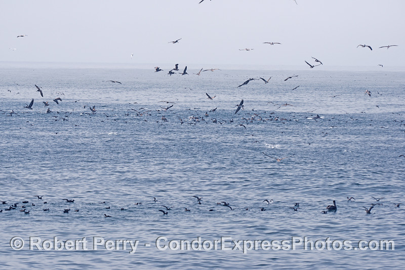 Seabirds on an oceanic hot spot.