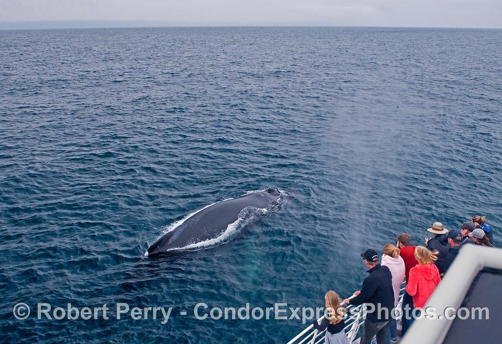 A humpback whale (<em>Megaptera novaeangliae</em>) and its human admirers.
