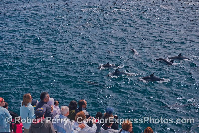Humans and common dolphis (<em>Delphinus capensis</em>).