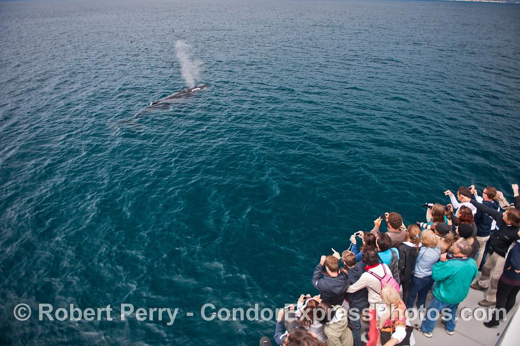 Humans enjoy a very close humpback whale (<em>Megaptera novaeangliae</em>) spout.