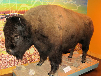 Buffalo, looks delicious.