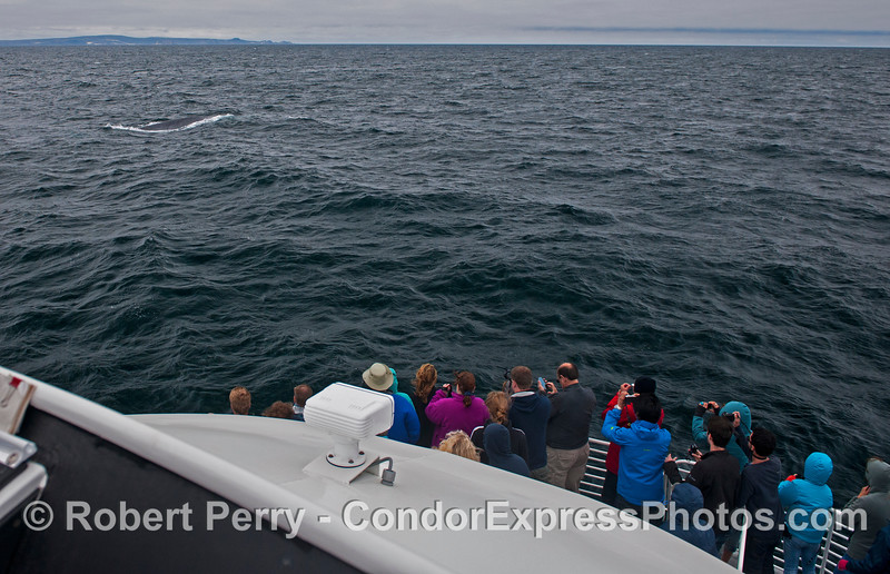 A view from the flying bridge of the Condor Express with people looking at a very friendly giant blue whale (<em>Balaenoptera musculus</em>) and San Miguel in the background.