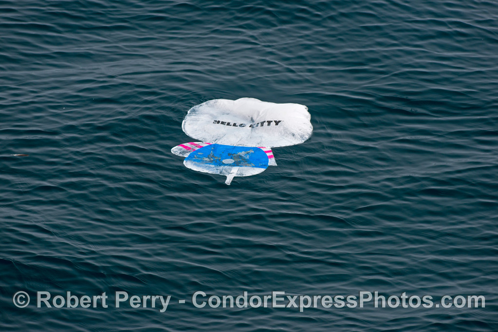 Dangerous sea trash - remains of a dead mylar balloon float on the surface.  Animals such as the ocean sunfish (Mola mola) that feed on gelatinous animals can ingest this type of garbage and harm themselves.