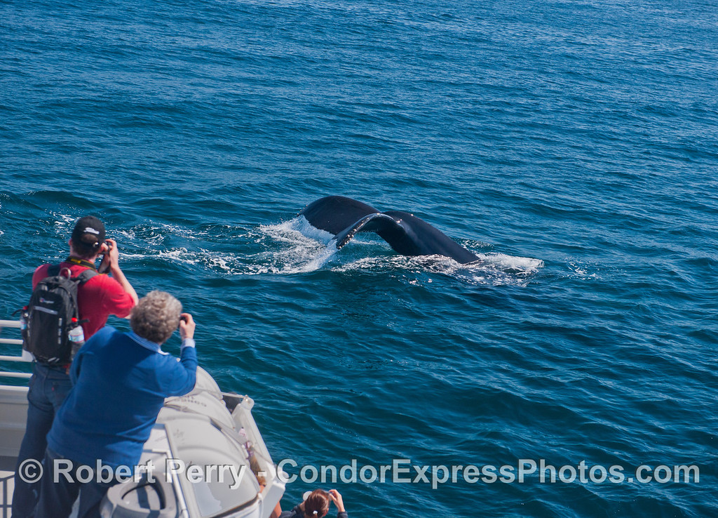 People get a great look at the mighty humpback whale (<em>Megaptera novaeanglia</em>) tail.