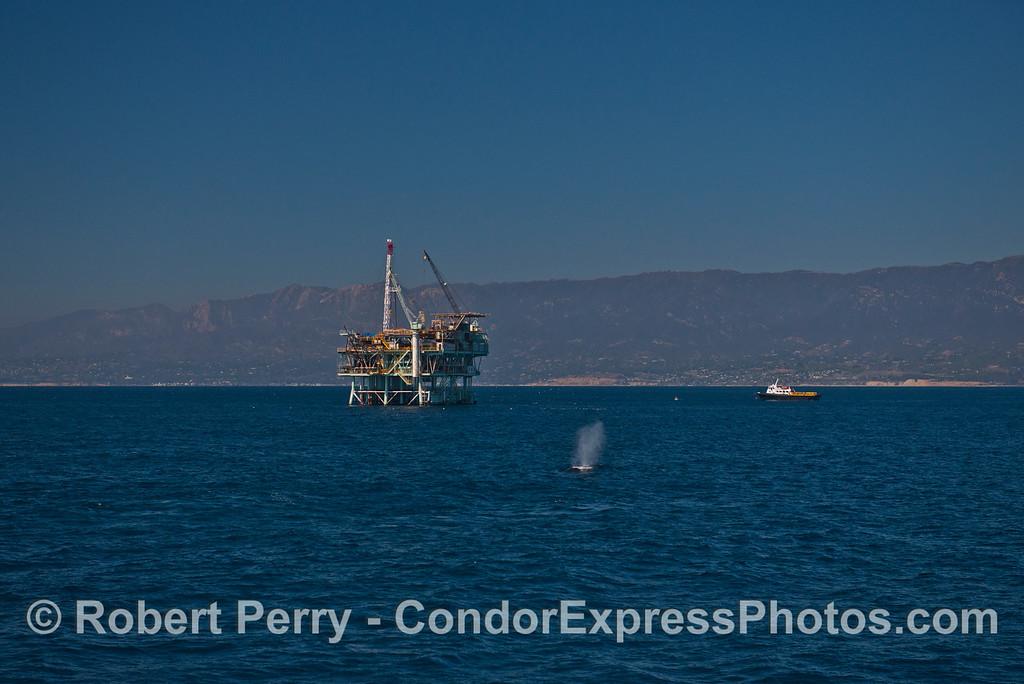 Offshore oil platform Hogan and a humpback whale (<em>Megaptera novaeangliae</em>).