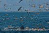 Seabirds and a humpback whale (Megaptera novaeangliae) - rounding out an oceanic hot spot.