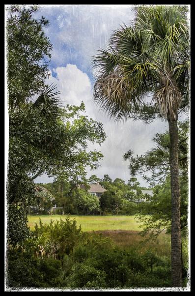 5-31-13 Bunnie's Backyard in Kiawah