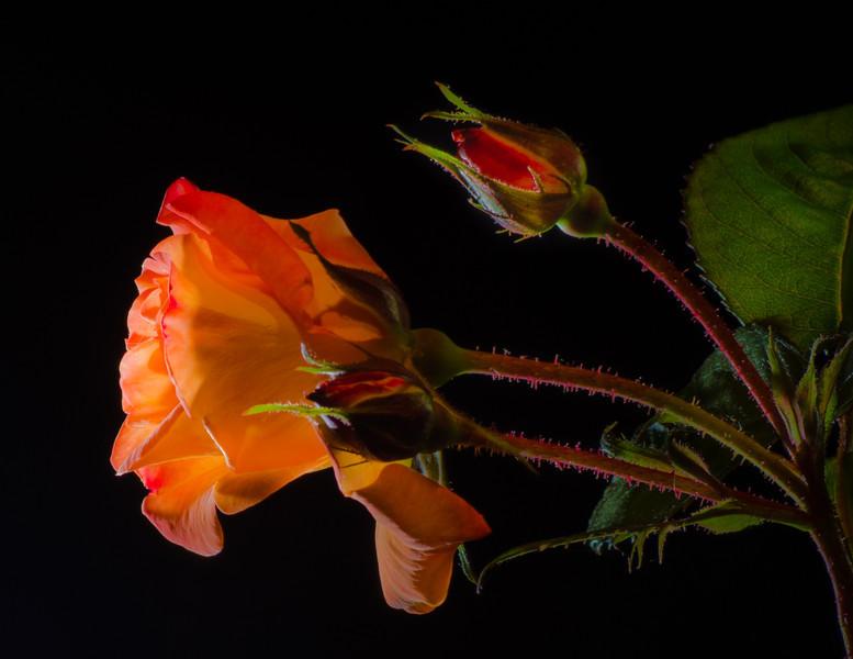 5-06-13 Studio Flowers-21-2-2