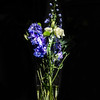 Delphiniums and Lisianthus<br /> Flowers from dinner guests a couple of weeks ago - and here's the Lisianthus I've just discovered.