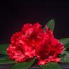 5-06-13 Studio Flowers-13-2
