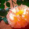 Studio Rose (8 of 13)