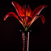 04-25-13 Red Lily Purple Vase-