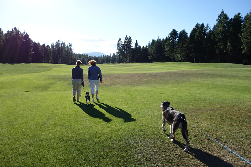 A pre-dinner walk on the golf course. Only Avery and Baloo came along because the other dogs had goen for a big walk earlier