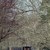 MET 040913 TREES CESINGER