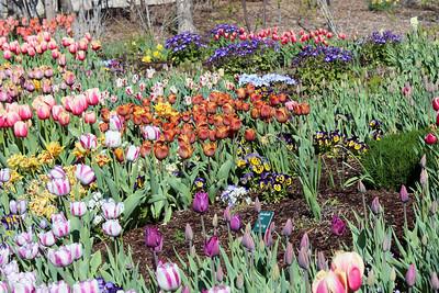 Tulip Festival Visit #2