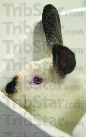 MET080213fair bunny detail