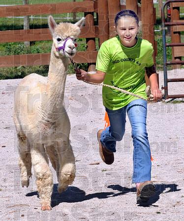 alpaca workout