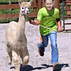 alpaca workout