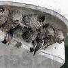 MET062513wabash swallows