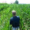 MET071013wabash cornfield
