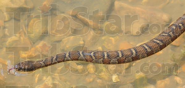 MET053113wabash snake