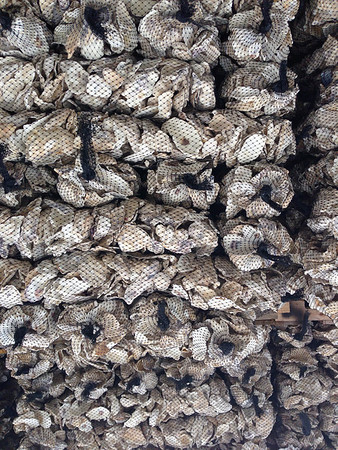 Stacks of oyster shells ready for planting