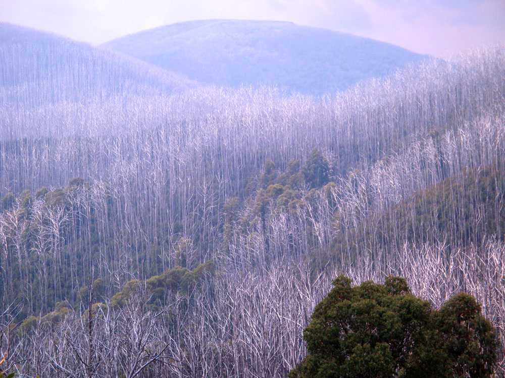 The mountains around the ski resort of Falls Creek (adjacent to Mt Beauty) in summer, following a bushfire.