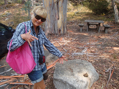Being Australian, Mum's an expert in wombat poo identification. Here she demonstrates her expertise.