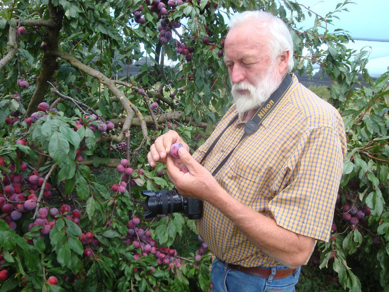 Uncle Grant gave up his research physicist job to reinvent himself as South Australia's biggest blueberry farmer. He has a bunch of plum trees etc too.