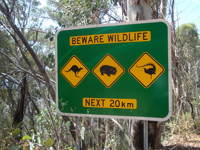 The hazards of driving in Australia. The middle one is, of course, a wombat.