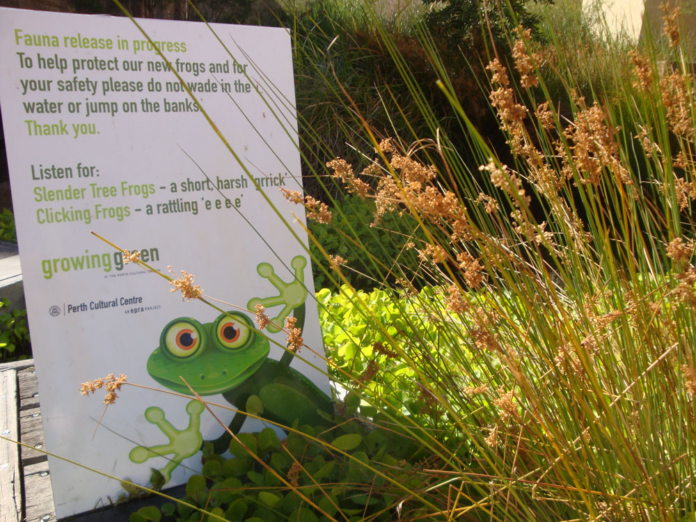 complete with a frog conservation campaign and all!