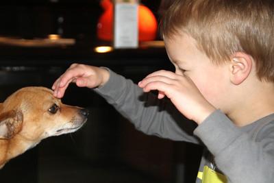 Dog hypnotist