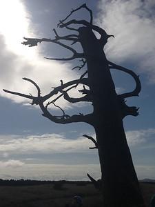 Clark's Tree (sculpture)